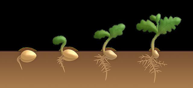 Klíčící semínka v půdě
